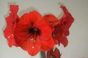 Το λουλούδι που έγινε... γίγας