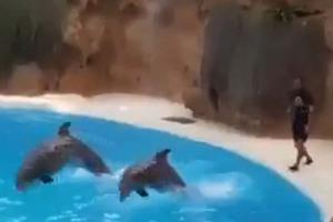 Δελφίνια, αυτά τα υπέροχα και πανέξυπνα πλάσματα
