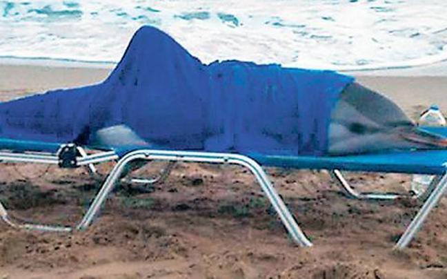 На пляже в Ретимно спасли дельфина