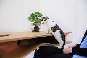 Ένα τραπέζι για... τη γάτα σου
