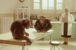 Μαϊμού δίνει μαθήματα ανθρωπιάς