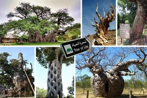 Απίθανα δέντρα σε απίστευτες ιστορίες