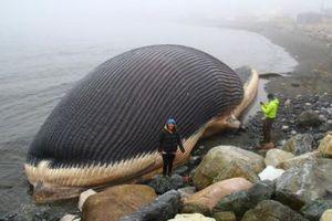 Η νεκρή φάλαινα - ωρολογιακή βόμβα σε παραλία του Καναδά
