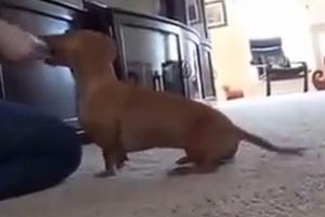 Ο πιο πρωτότυπος τρόπος να τσιμπολογήσει ένας σκύλος