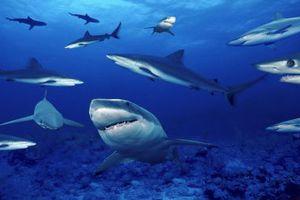 Αμφιλεγόμενο πρόγραμμα για την προστασία των λουόμενων από καρχαρίες