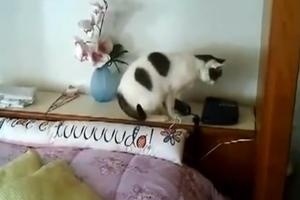 Η γάτα που απαντάει στο τηλέφωνο
