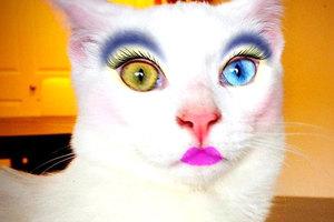 Μακιγιάζ για γάτες!