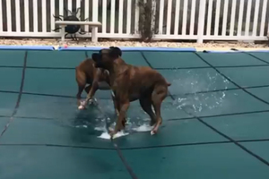 Όταν το κάλυμμα της πισίνας γίνεται... παιδική χαρά