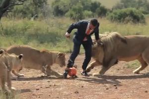 Παίζοντας μπάλα με τα λιοντάρια!