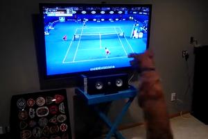 Ο σκύλος που λατρεύει το τένις