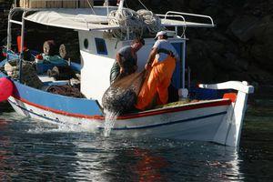 «Σε χρυσωρυχείο παράνομης αλιείας έχει μετατραπεί το Άγιο Όρος»