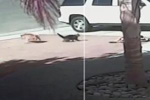 Γάτα-καμικάζι σώζει αγόρι από επίθεση σκύλου!