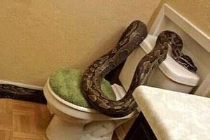 Εμφανίστηκε πύθωνας μέσα στα πόδια της ενώ έκανε μπάνιο
