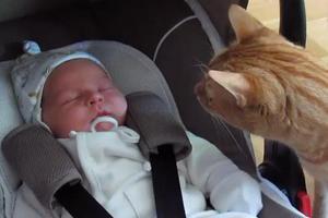 Όταν η γάτα συνάντησε για πρώτη φορά το μωρό