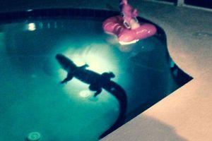 Βρήκαν στην πισίνα τους έναν… αλιγάτορα