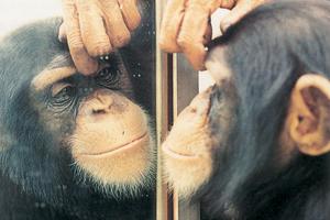 Τι βλέπουν τα ζώα σε έναν καθρέφτη