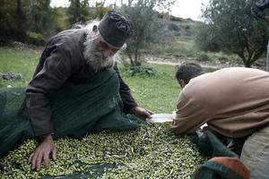 Λάδι, μέλι και αυγοτάραχο για τη… σωτηρία της Ελλάδας