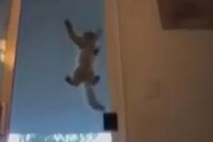 Η γάτα του Spiderman