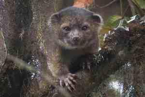 Το Top 10 των νέων ειδών που ανακαλύφθηκαν στη Γη το 2013