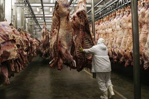 «Μόνο σε εγκεκριμένες εγκαταστάσεις οι θανατώσεις ζώων για ανθρώπινη κατανάλωση»