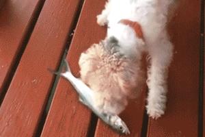 Κάπως έτσι παθαίνουν έμφραγμα τα σκυλιά