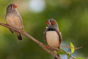 Τα πουλιά μπορούν να καταλάβουν την ανθρώπινη ομιλία