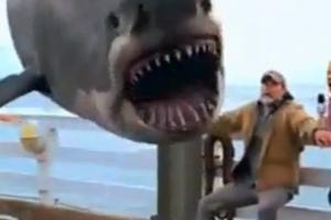 Η ανάσταση του καρχαρία
