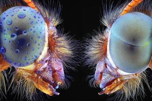 Τα έντομα σε απόσταση αναπνοής