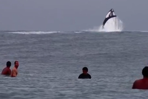Σέρφινγκ παρέα με φάλαινες