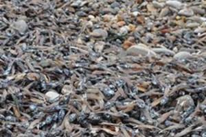 Τεράστια οικολογική καταστροφή στη Σάμο