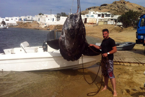Με... γερανό έβγαλαν τεράστιο ψάρι από το σκάφος στη Μύκονο