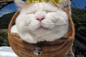 Ο πιο ήρεμος γάτος