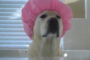 Σκύλοι που λατρεύουν το μπάνιο