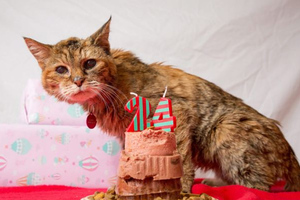 Πέθανε η γηραιότερη γάτα στον κόσμο