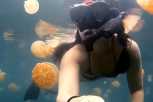 Κολυμπώντας με μέδουσες