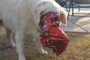 Η περιέργεια κάνει το σκύλο να ασφυκτιά