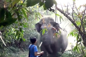 Τουρίστας σταματάει οργισμένο ελέφαντα με μια κίνηση του χεριού του!