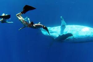 Οι γοργόνες και οι φάλαινες