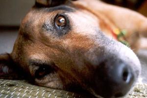 Καταγγελία για βιασμό σκυλίτσας στο Ηράκλειο Κρήτης