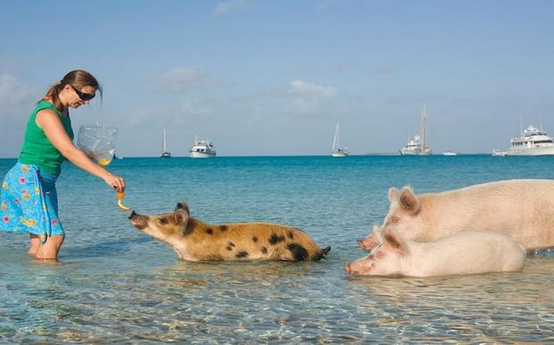 Διακοπές στο βασίλειο των ζώων! Προορισμοί απίστευτοι!