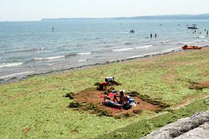 Παραλία καλύφθηκε από φύκια