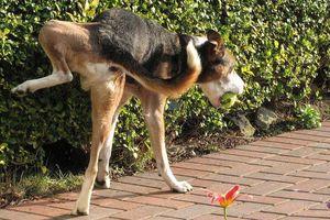 Τα θηλαστικά ουρούν κατά μέσο όρο 21 δευτερόλεπτα