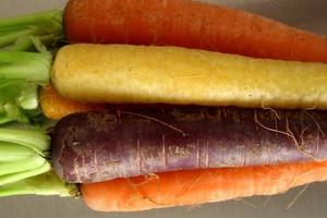 Τα καρότα δεν ήταν πάντα πορτοκαλί