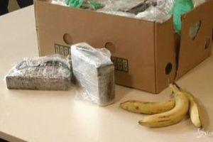 Κοκαΐνη σε... μπανάνες από την Κολομβία εντοπίστηκε σε πορτογαλικά σουπερμάρκετ
