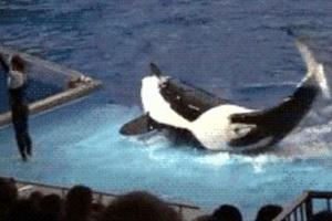 Η δολοφόνος φάλαινα