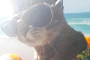 Το selfie της γάτας