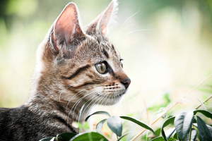 Οι γάτες «ακούν» τα μάτια τους
