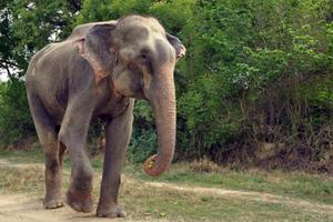 Δάκρυσε ο ελέφαντας όταν τον ελευθέρωσαν