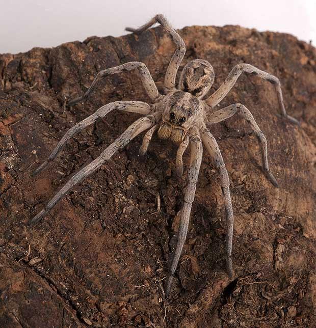 Μερικά πράγματα που δε γνωρίζατε για τις αράχνες