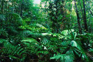 Τα δάση της βροχής καταστρέφονται όμως η Γη πρασινίζει